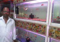 पटना में बढ़ते शहरीकरण से रंगीन मछलियों की मांग बढी